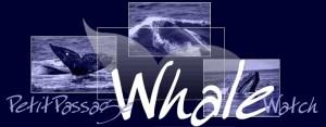 Whale Watch PPWW